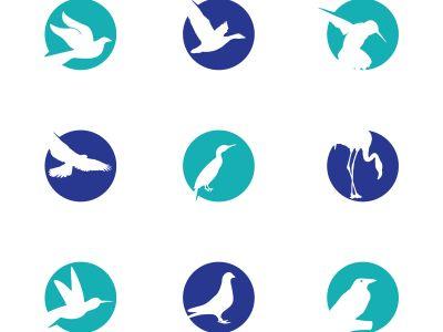 birds vector logo design, green, circle, hummingbird, flying bird, friendly, wildlife illustration