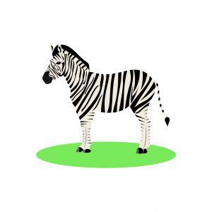 Illustration of white and black animal zebra on white background.