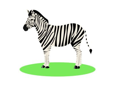 Illustration of white and black animal zebra on white background.